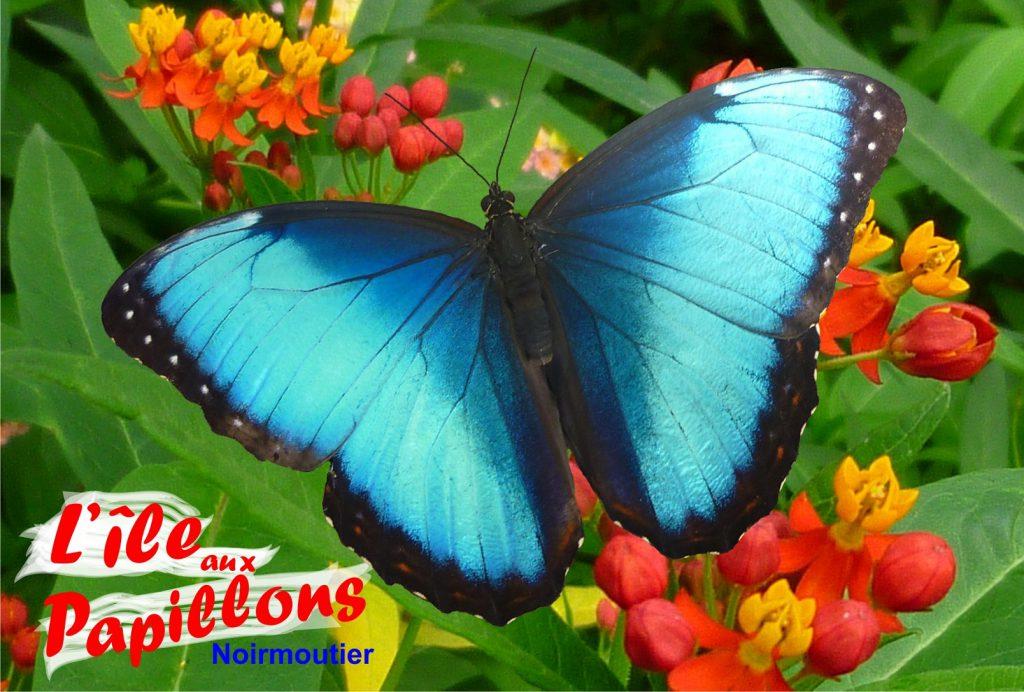 ile-aux-papillons-noirmoutier